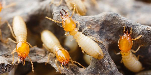 termite control berlin nj